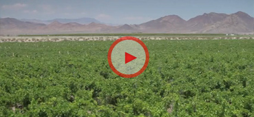 A Sustainable Solution: The Cadiz Valley Water Project